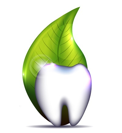 healthy white tooth with leaf behind it in white background
