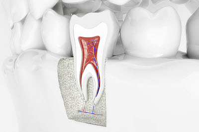 3d render of a healthy tooth and its anatomical structure