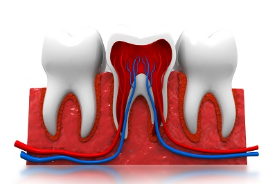 cross section of human tooth rendered in 3D