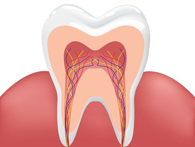 illustration of healthy tooth and gum