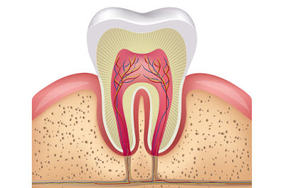 Illustration of healthy tooth anatomy